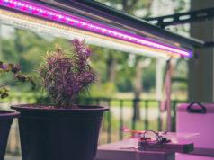 Pflanzenlampen Test Vergleich