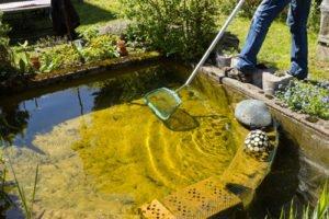 algen im teich diese tipps helfen. Black Bedroom Furniture Sets. Home Design Ideas