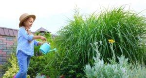 Giftige Pflanzen Gefahr