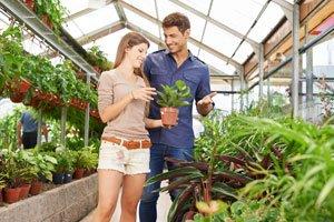 Augen auf beim Pflanzenkauf