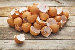 Eierschalen sind guter Dünger!