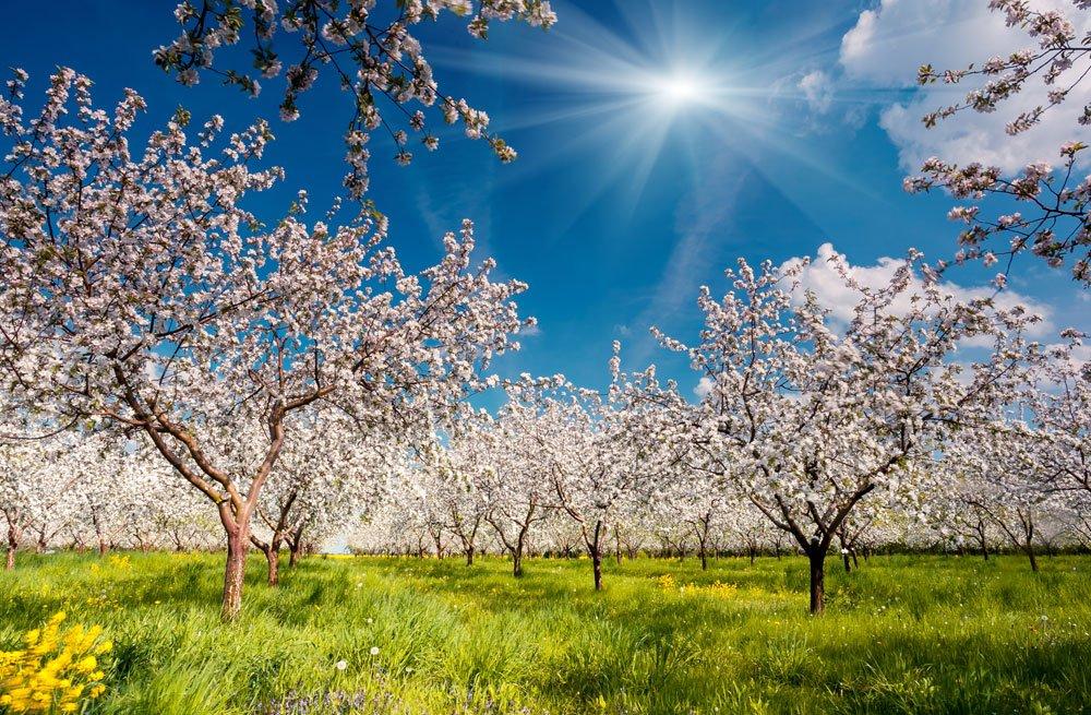 faule Äpfel am Baum - Vorbeugung