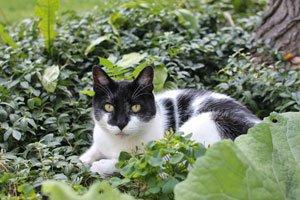 So einige Pflanzen sind für Katzen giftig