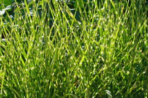 Gräser schneiden