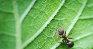 Hausmittel gegen Ameisen