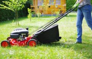 Klee entfernen Rasenmähen