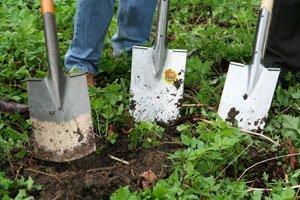 Eine Nährstoffanalyse lässt effektiver Gärtnern