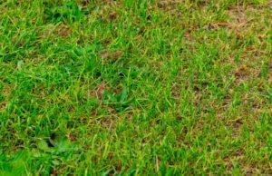 Rasen keimt nicht