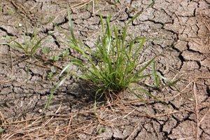 Ist der Boden zu hart, gedeihen die Rasensamen nicht