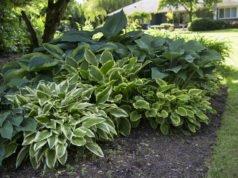 Pflanzen für Schatten