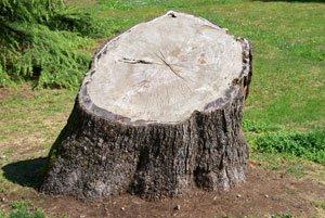 Lassen Sie den Baumstumpf einfach verrotten