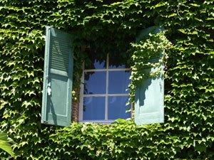 Begrünte Hauswände sieht man immer häufiger