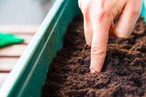 Kräuter gießen Fingertrick