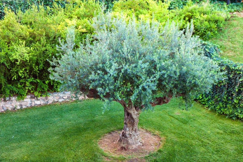 Baum grasfrei halten