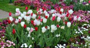 Blumenzwiebeln pflanzen Tipps