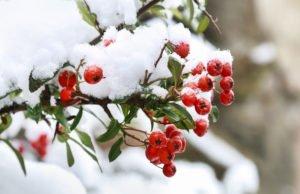 Gehölze im Winter