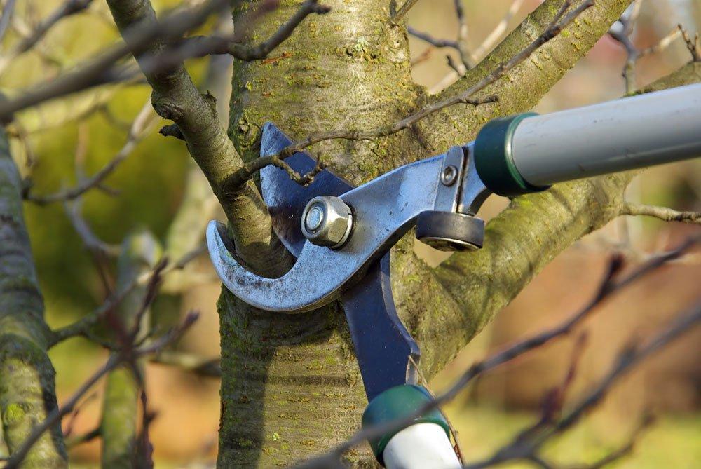 Baum Schnittstelle behandeln