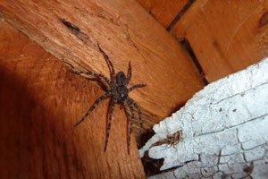 Spinnen sind nützliche Tierchen