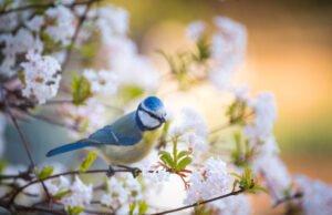 Vögel anlocken