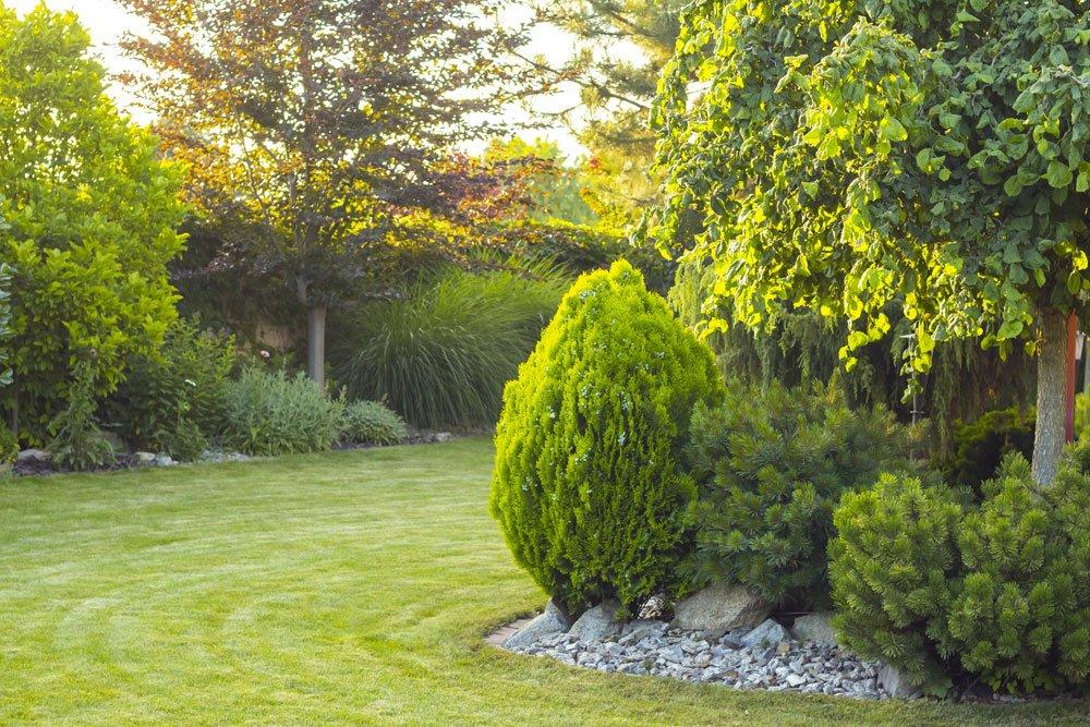 Bäume Garten Streit