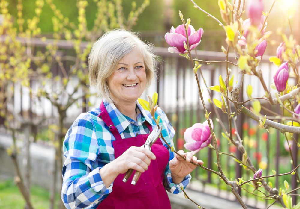 Magnolien schneiden – So geht's!