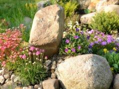 Pflanzen für den Steingarten
