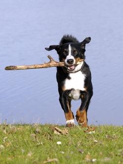 Ruhestörung durch Hundegebell