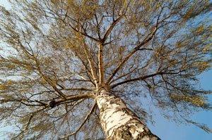 Hohe Bäume können ein Streitthema werden