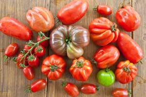 Wissenswertes über Tomatensorten