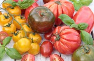 Verschiedene Tomatensorten