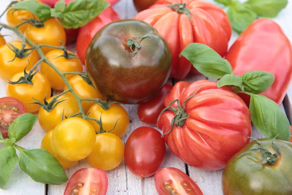 Wissenswertes über Tomaten Sorten