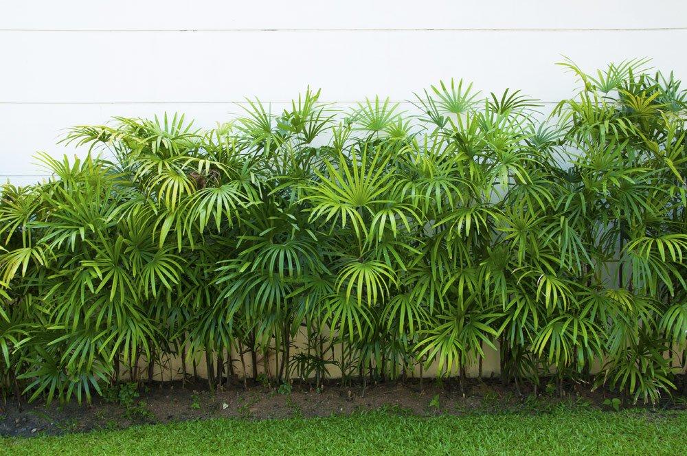 Wurzelsperre für Bambus verhindert Wuchern