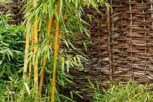 Bambus vergrößert sich unterirdisch durch Wurzelbildung