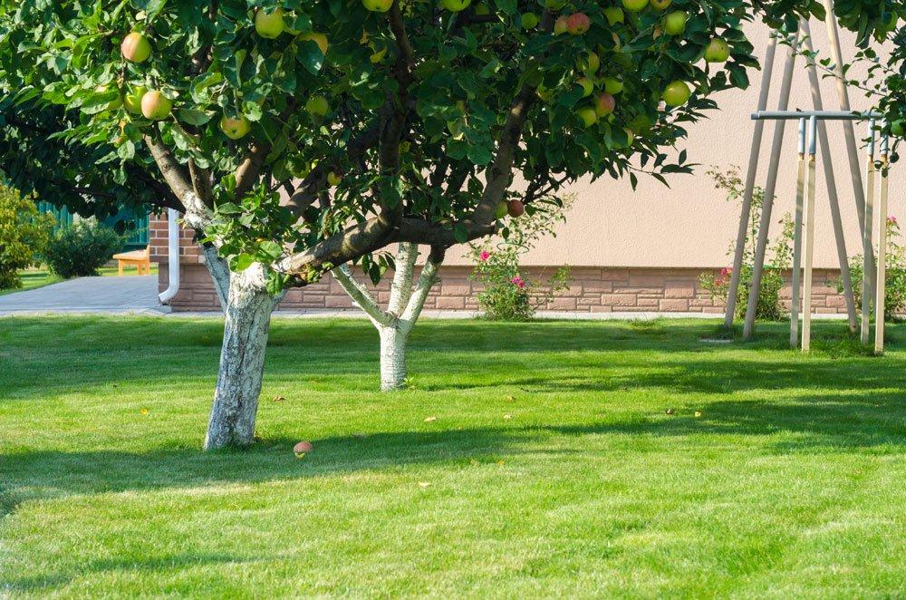 Apfelbaum als Hausbaum
