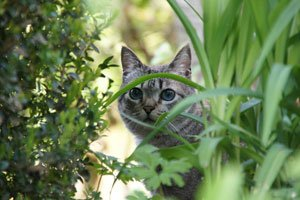 Vielen sind Katzen ein Dorn im Auge
