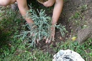 Sträucher werden im Herbst gepflanzt