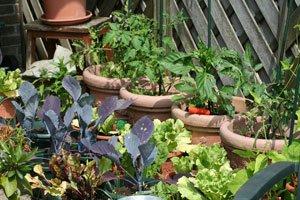 Gemüse aus dem eigenen Garten schmeckt einfach besser