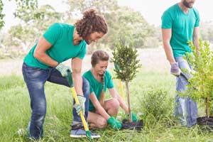 Einen Baum pflanzen - Welcher ist der Richtige
