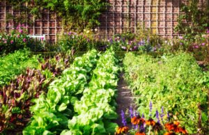 Gemüse Aussaatzeiten