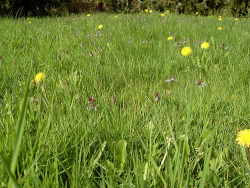 Lassen Sie eine Blumenwiese wachsen