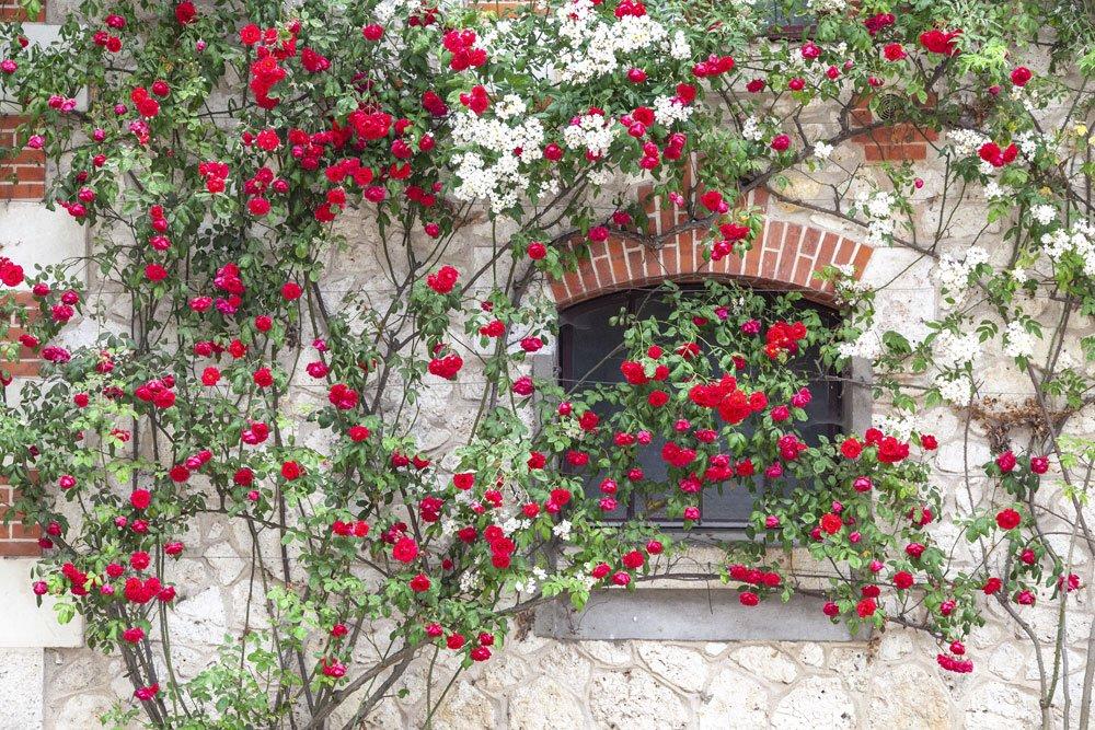 Kletterhilfe Pflanzen