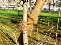 Achterschleife Baum