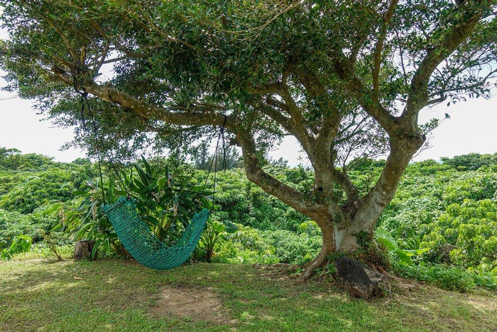 Alten Baum verpflanzen