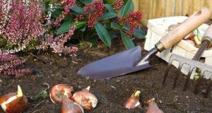 Blumenzwiebeln nicht ausgraben