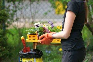 Stiefmütterchen pflanzen