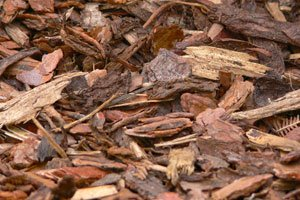 Mulch dient z.B. als Schutz vor Verdunstung