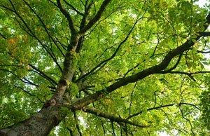Was tun wenn ein Baum zu groß wird?