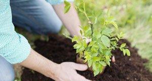 Bodenmüdigkeit – Was ist das?