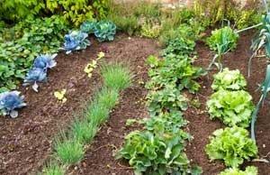 Gemüsebeete anlegen - Darauf sollten Sie achten