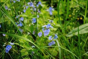 3 Pflanztipps für den Garten